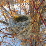 Empty Nest Reduced