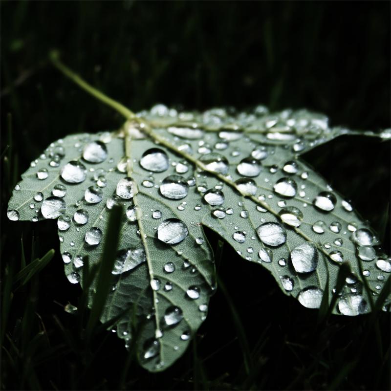 Leaf with Dew